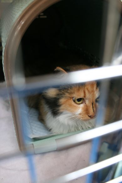 【移動先募集】センター(本所)収容猫(9/24訪問)_f0242002_00592152.jpg