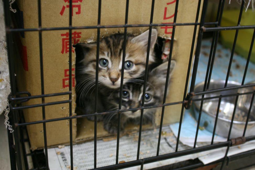 【移動先募集】センター(本所)収容猫(9/24訪問)_f0242002_01041700.jpg