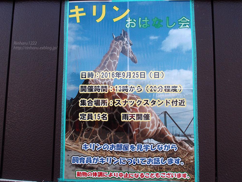 2016.9.25 岩手サファリパーク☆キリンのコウタとミナミ【Giraffe】_f0250322_2124852.jpg
