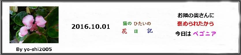 e0033229_18433648.jpg