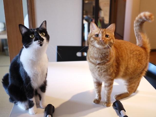 猫のお留守番 クルルちゃんタマラちゃん編。_a0143140_2011223.jpg