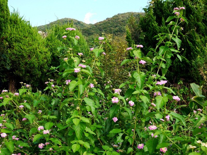 柿実る秋の里山を行く_b0093754_22421493.jpg