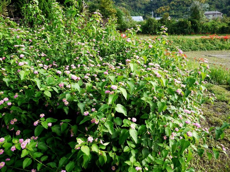 柿実る秋の里山を行く_b0093754_2242267.jpg