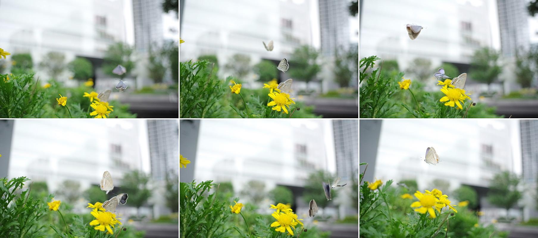 a0181059_201205.jpg