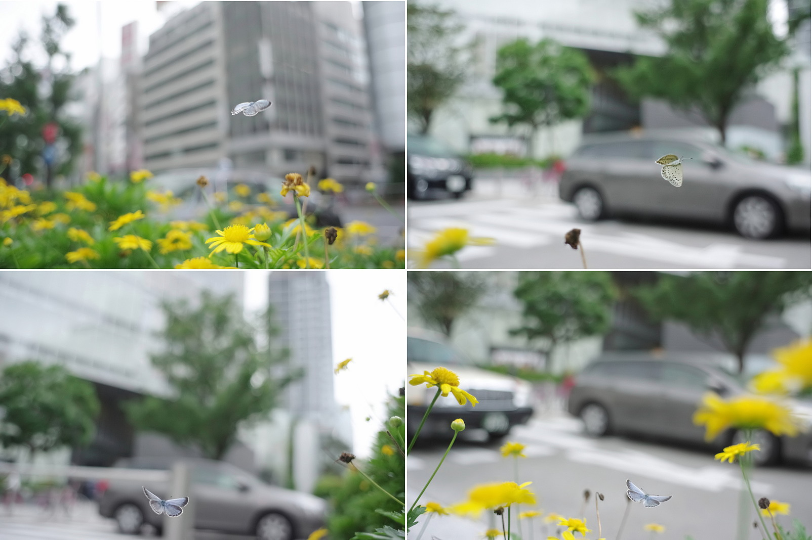 a0181059_20121975.jpg