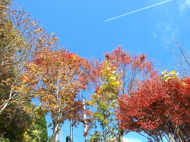 10月の気温と服について_e0122680_17164614.jpg