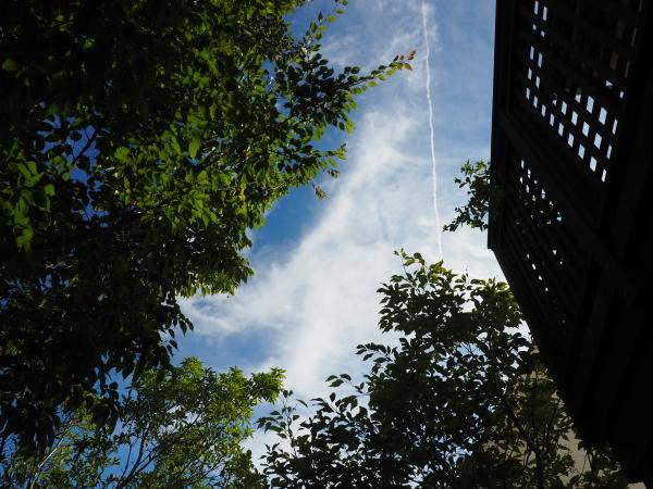 庭には秋の訪れ_e0232798_13312904.jpg