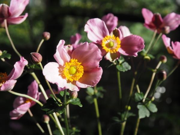 庭には秋の訪れ_e0232798_13335167.jpg