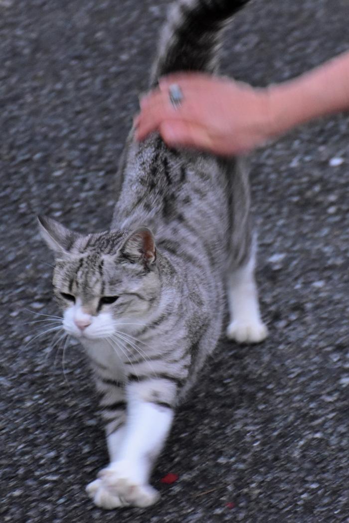 こんな色、こんなネコ、こんな散歩いかがでしょうか (^o^)_c0049299_22062555.jpg
