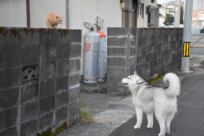 こんな色、こんなネコ、こんな散歩いかがでしょうか (^o^)_c0049299_22063578.jpg
