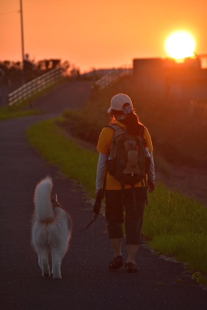 こんな色、こんなネコ、こんな散歩いかがでしょうか (^o^)_c0049299_22070839.jpg