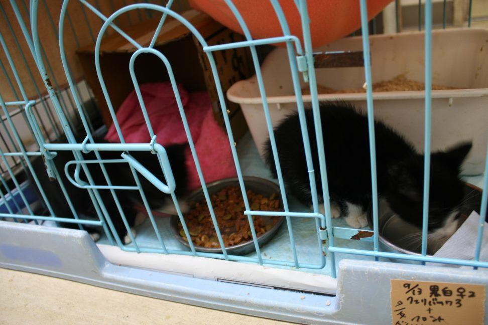 【移動先募集】センター(本所)収容猫(9/24訪問)_f0242002_01160957.jpg
