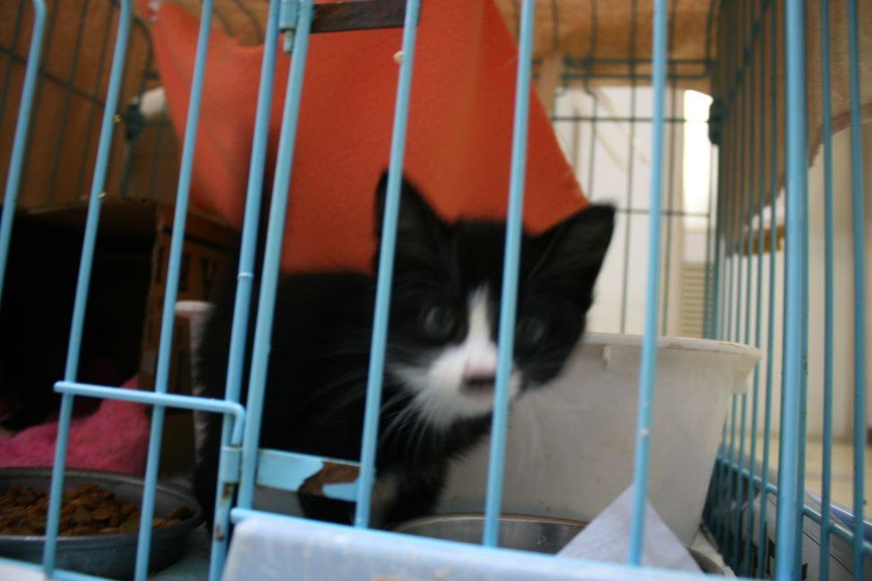 【移動先募集】センター(本所)収容猫(9/24訪問)_f0242002_01161730.jpg