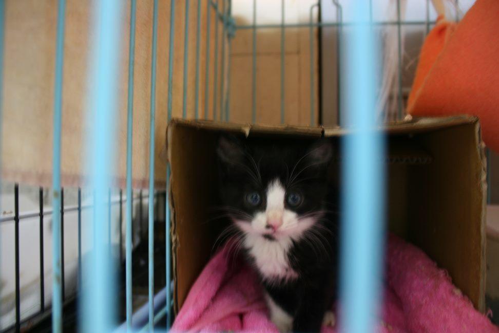 【移動先募集】センター(本所)収容猫(9/24訪問)_f0242002_01162390.jpg