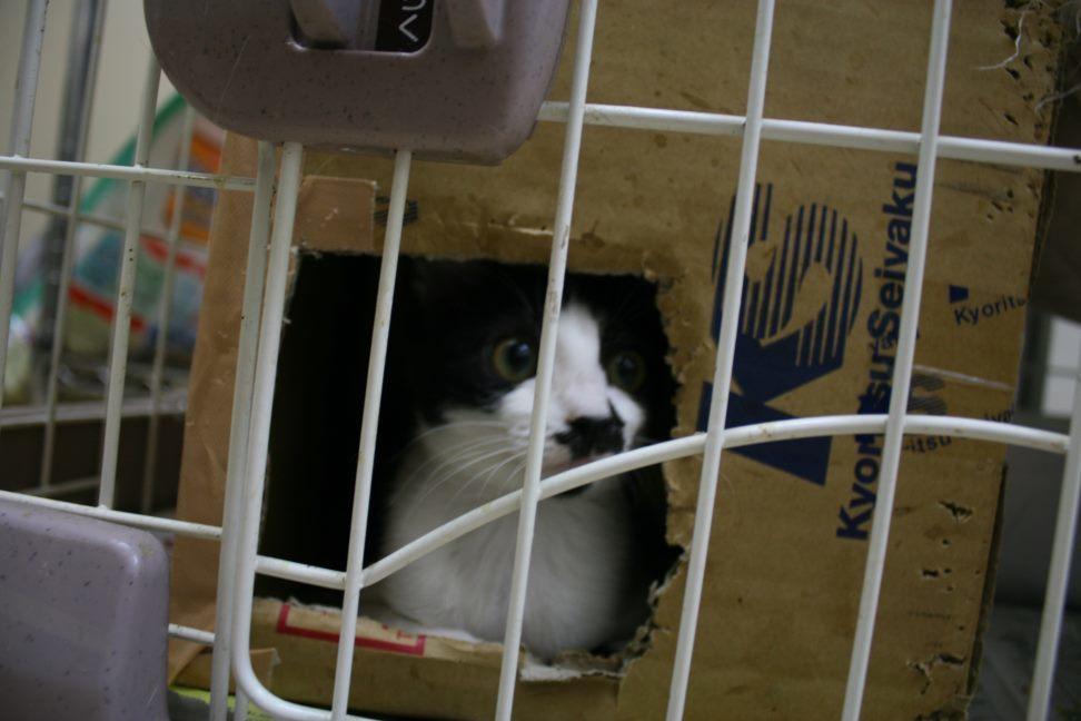【移動先募集】センター(本所)収容猫(9/24訪問)_f0242002_01162900.jpg
