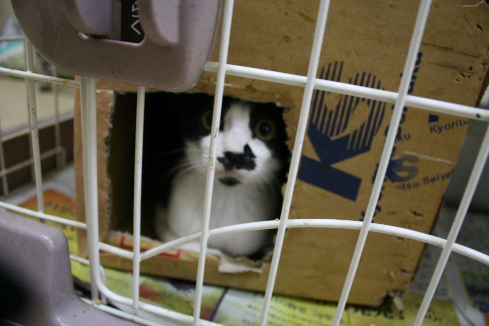 【移動先募集】センター(本所)収容猫(9/24訪問)_f0242002_01163639.jpg