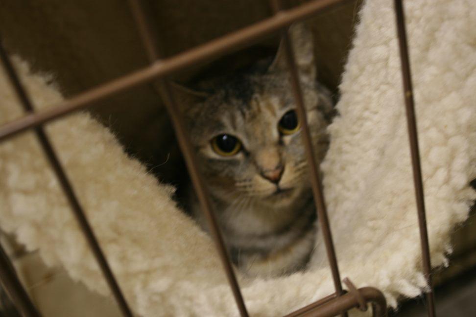 【移動先募集】センター(本所)収容猫(9/24訪問)_f0242002_01164865.jpg
