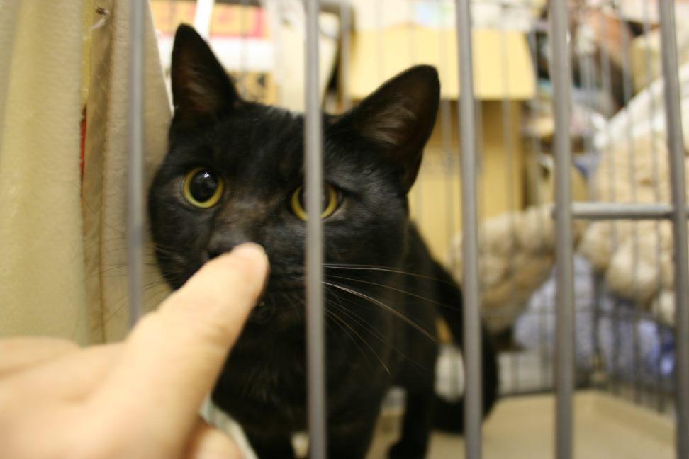 【移動先募集】センター(本所)収容猫(9/24訪問)_f0242002_01170732.jpg
