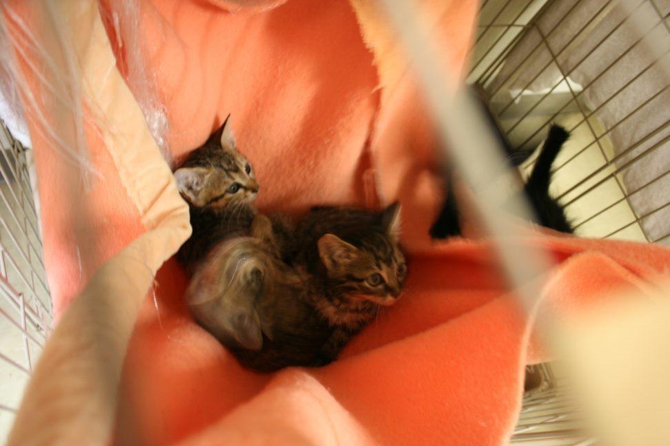 【移動先募集】センター(本所)収容猫(9/24訪問)_f0242002_01175837.jpg