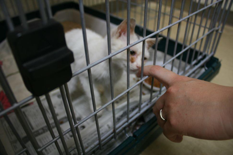 【移動先募集】センター(本所)収容猫(9/24訪問)_f0242002_01180775.jpg
