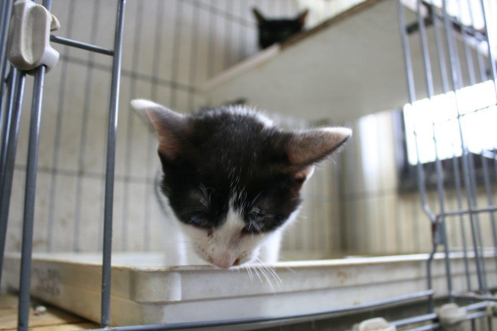【移動先募集】センター(本所)収容猫(9/24訪問)_f0242002_01183363.jpg