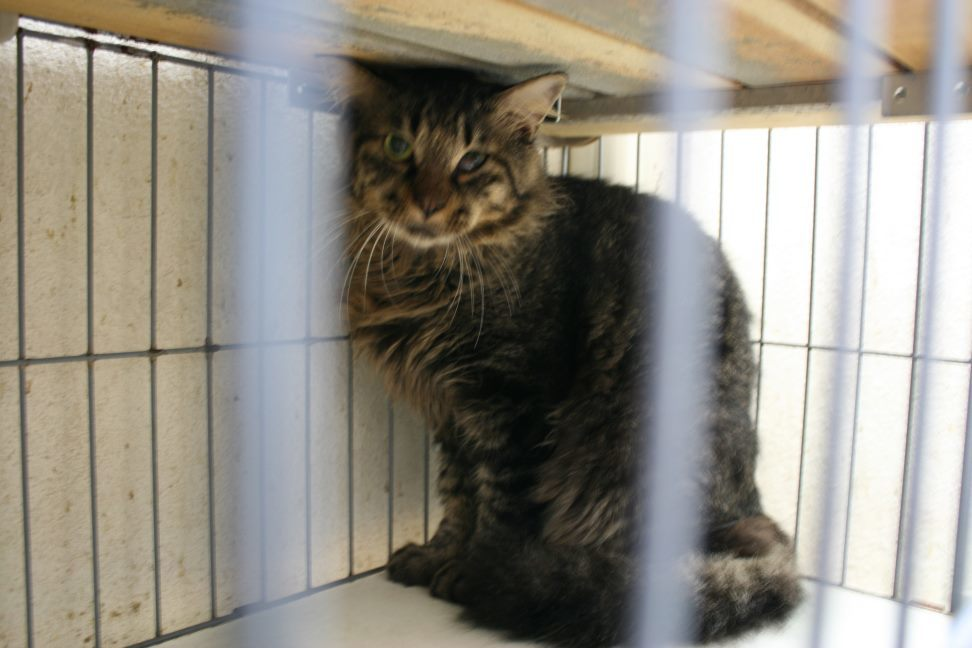 【移動先募集】センター(本所)収容猫(9/24訪問)_f0242002_01184289.jpg
