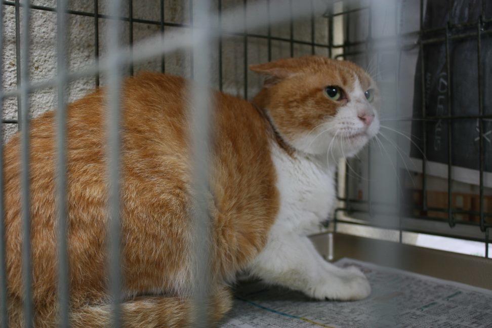 【移動先募集】センター(本所)収容猫(9/24訪問)_f0242002_01185003.jpg