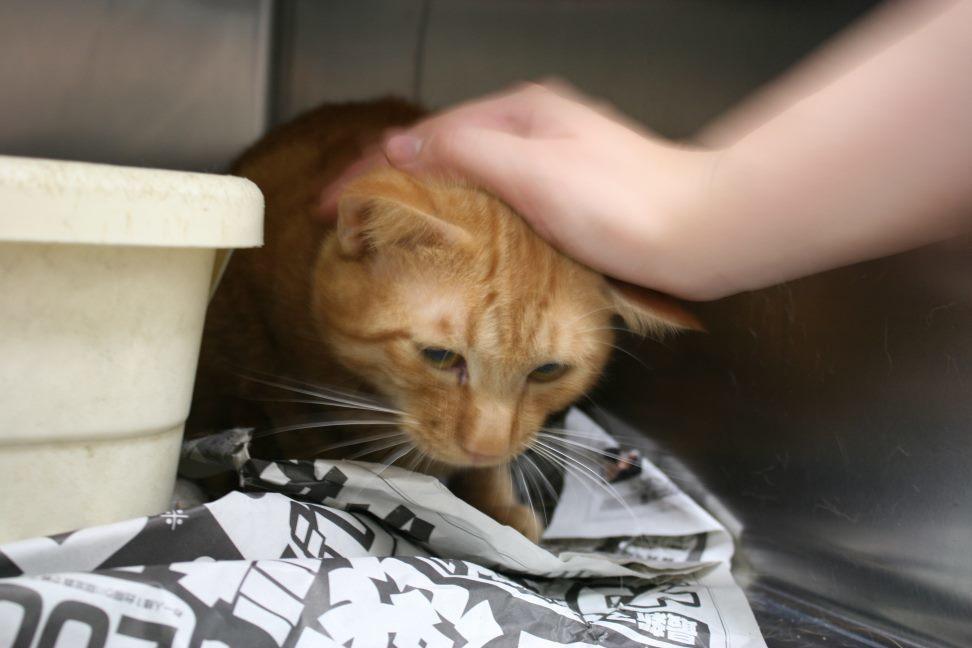 【移動先募集】センター(本所)収容猫(9/24訪問)_f0242002_01200822.jpg
