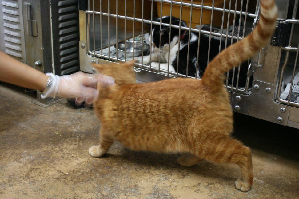 【移動先募集】センター(本所)収容猫(9/24訪問)_f0242002_01202846.jpg