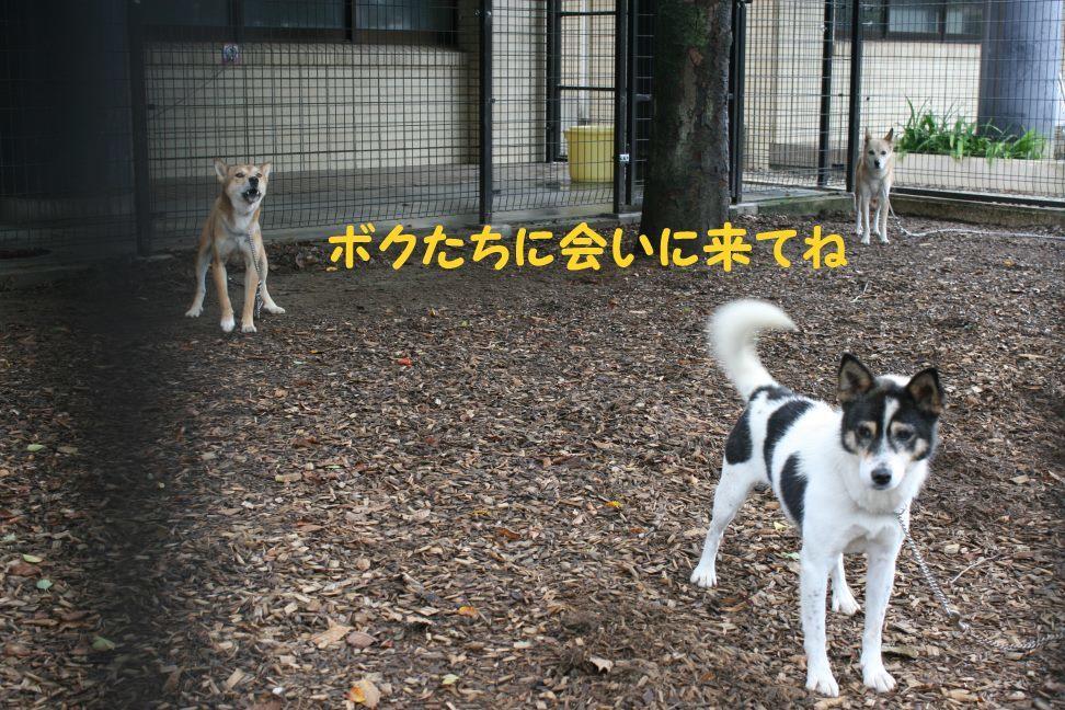 【移動先募集】センター(本所)収容猫(9/24訪問)_f0242002_01205004.jpg