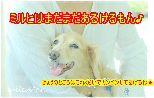 b0115642_1542178.jpg