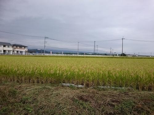 そば 椿庵_c0100865_10002196.jpg