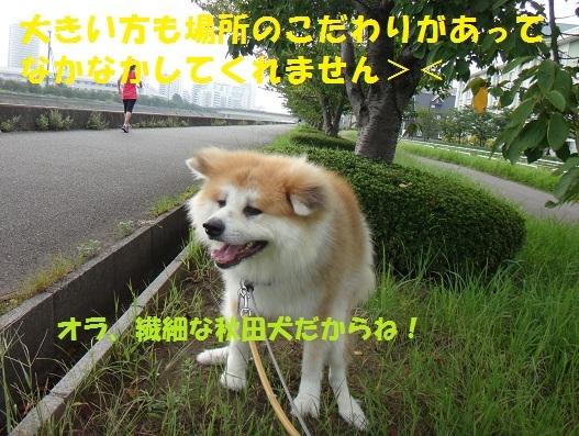 f0121712_07571175.jpg