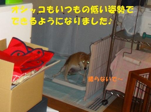 f0121712_08211451.jpg
