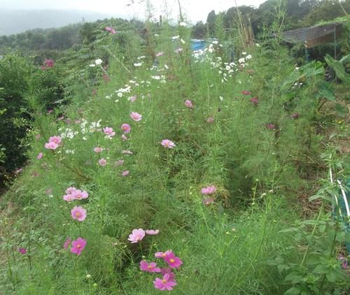 ここは草原...草取りです..._b0137932_1526877.jpg
