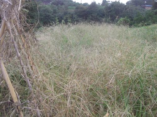 ここは草原...草取りです..._b0137932_15271379.jpg