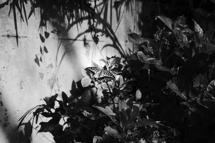 shadow & light (4cut)_e0342136_17134298.jpg