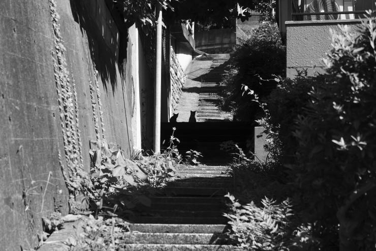 shadow & light (4cut)_e0342136_17135133.jpg