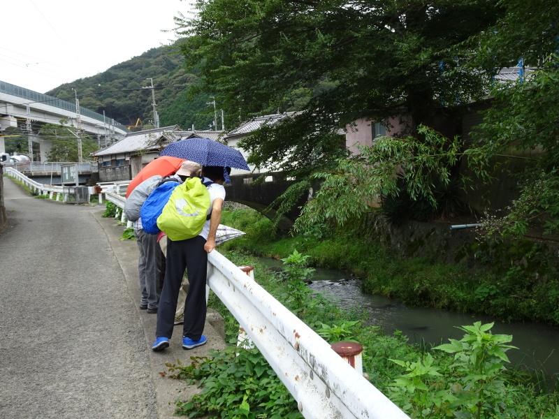 10月度植物観察 in 孝子の森_c0108460_21084065.jpg