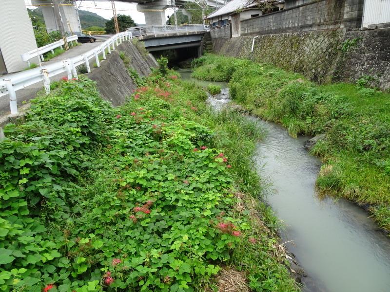 10月度植物観察 in 孝子の森_c0108460_21084236.jpg