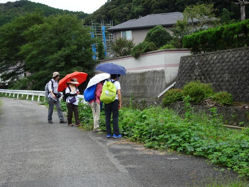 10月度植物観察 in 孝子の森_c0108460_21084897.jpg