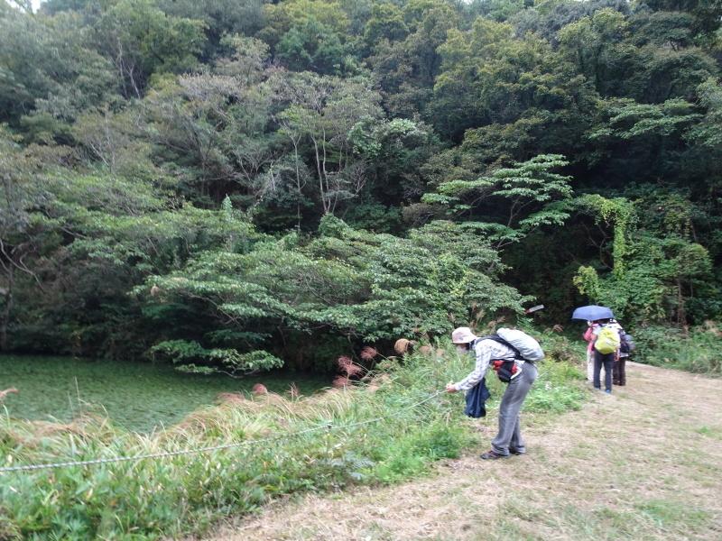 10月度植物観察 in 孝子の森_c0108460_21291990.jpg