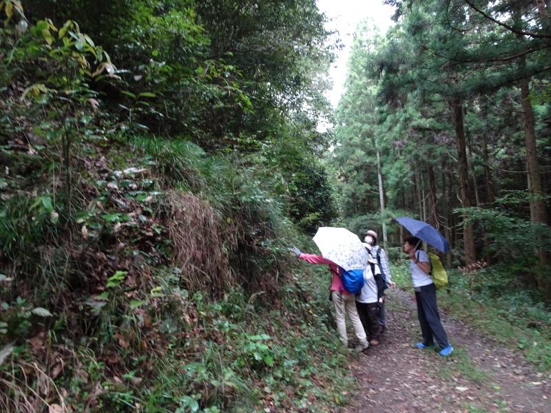 10月度植物観察 in 孝子の森_c0108460_21292830.jpg