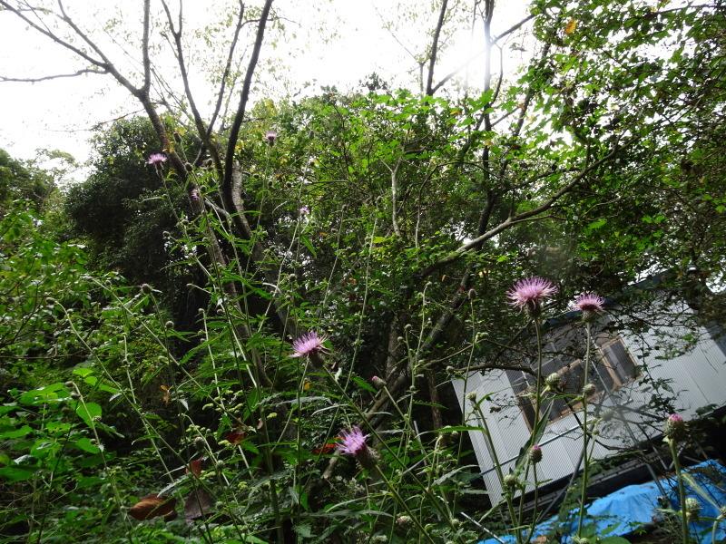 10月度植物観察 in 孝子の森_c0108460_21301294.jpg