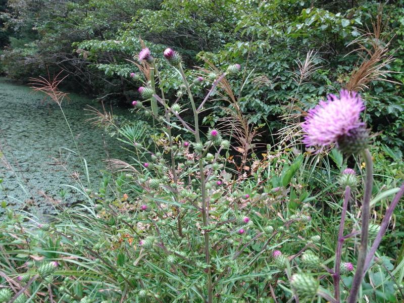 10月度植物観察 in 孝子の森_c0108460_21301609.jpg