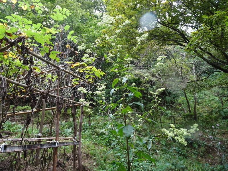 10月度植物観察 in 孝子の森_c0108460_21342764.jpg