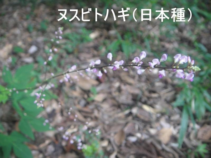 10月度植物観察 in 孝子の森_c0108460_21351784.jpg