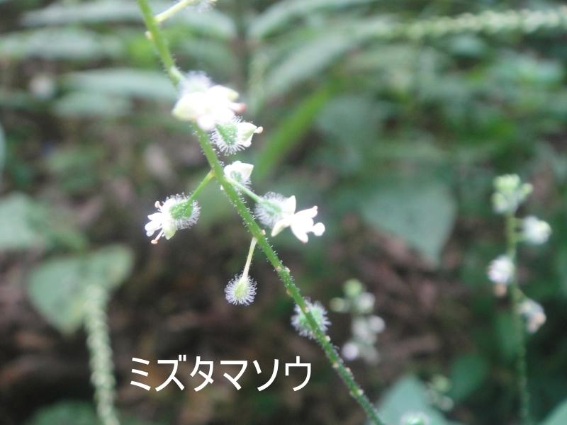 10月度植物観察 in 孝子の森_c0108460_21351867.jpg
