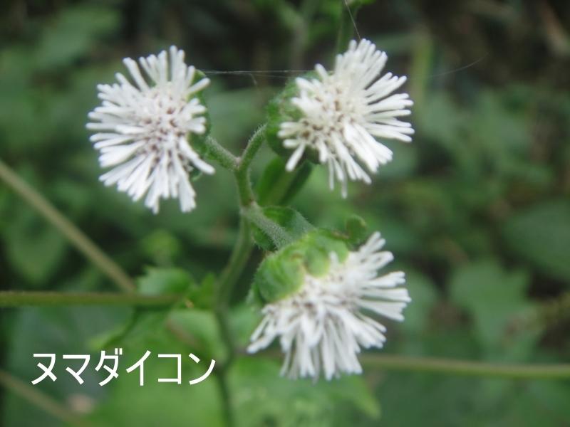 10月度植物観察 in 孝子の森_c0108460_21352053.jpg