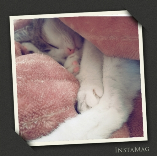 毛布と猫_b0328361_21371470.jpg